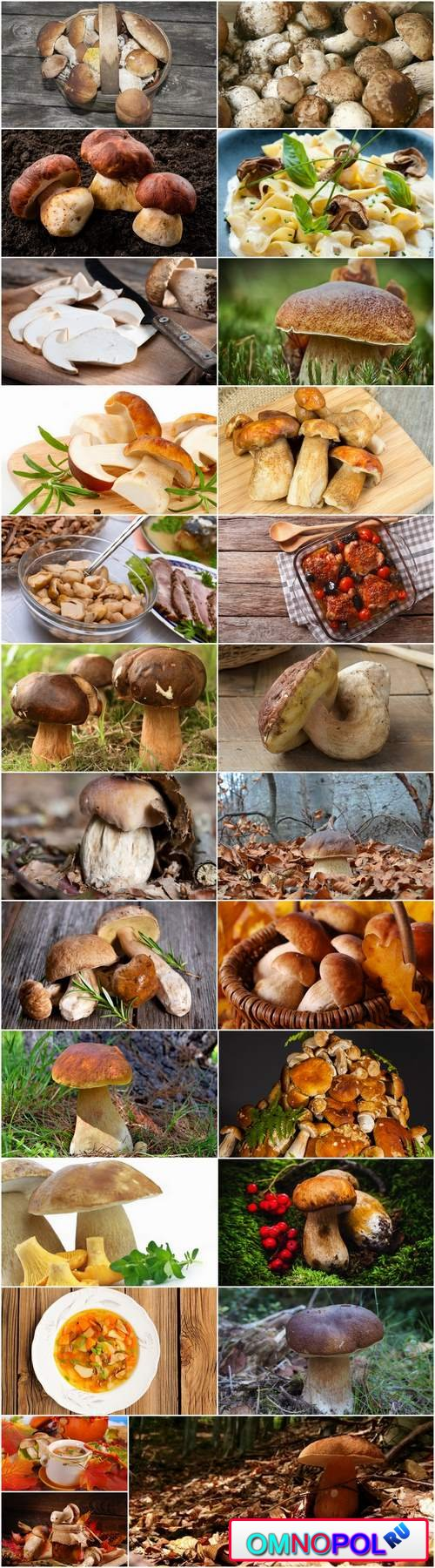 White fungus harvest mushroom picking a still life 25 HQ Jpeg